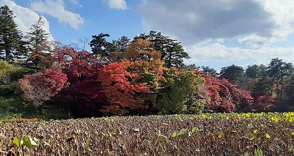 2020年弘前公園(弘前城)の紅葉写真_05