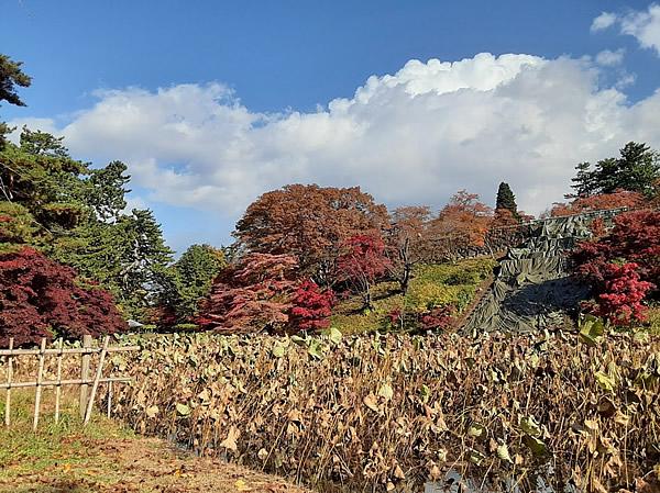 2020年弘前公園(弘前城)の紅葉写真_07