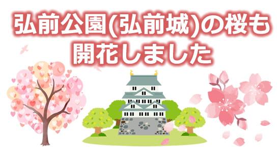 弘前公園(弘前城)の桜も開花