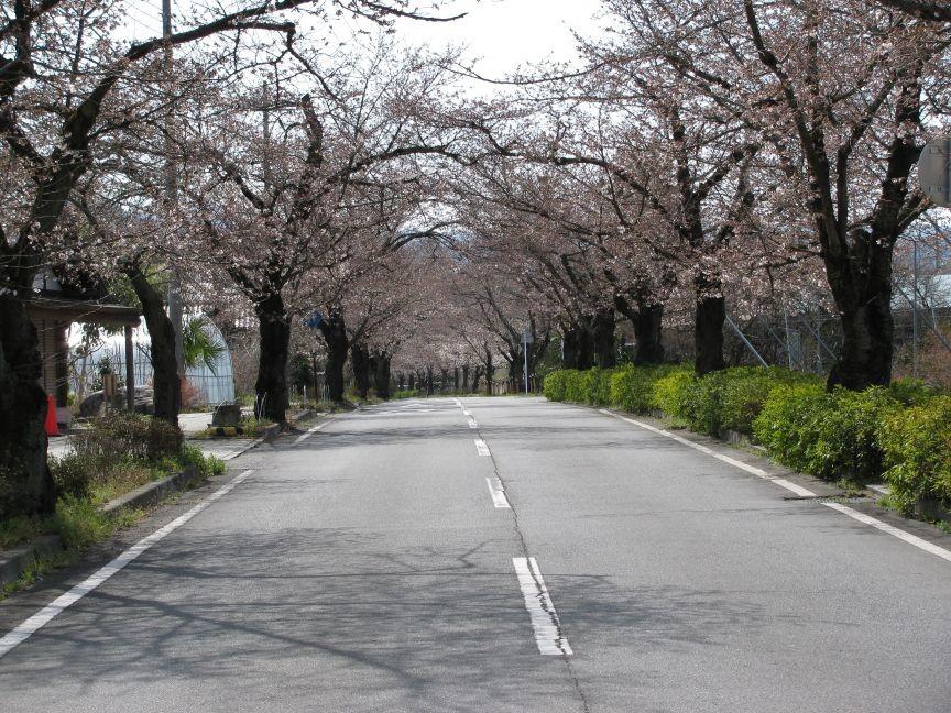 f:id:aobanozomi:20090405191944j:image:w150,left