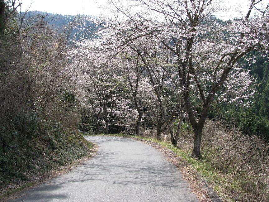 f:id:aobanozomi:20090405191949j:image:w150,left