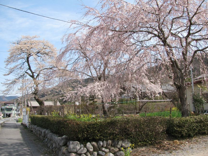 f:id:aobanozomi:20090405191952j:image:w150,left