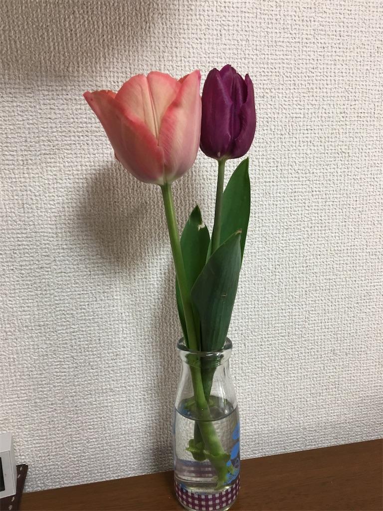 f:id:aohana:20190403085351j:image