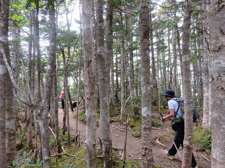 激藪をこなすと木賊山の近く