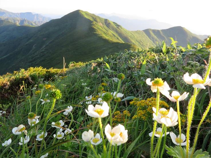 竜門山避難小屋周辺のお花