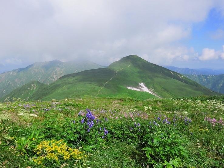 大朝日岳周辺はお花畑