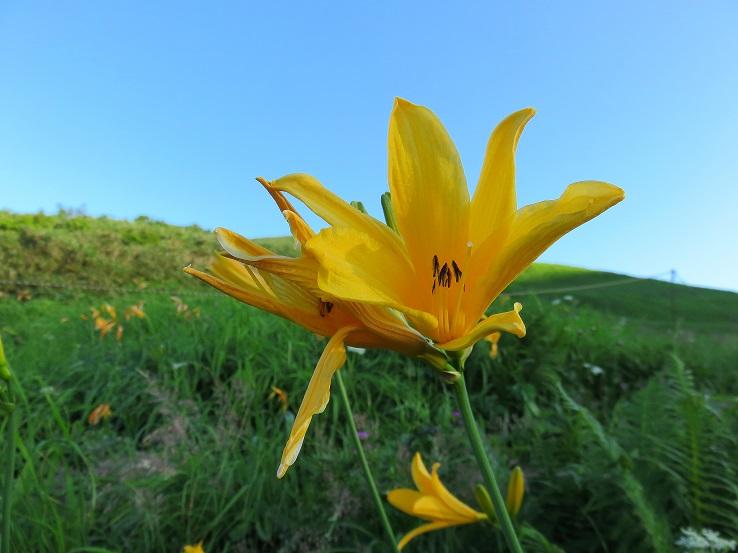 月山のお花