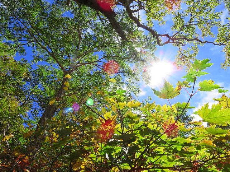 妙高山の紅葉が始めっていた