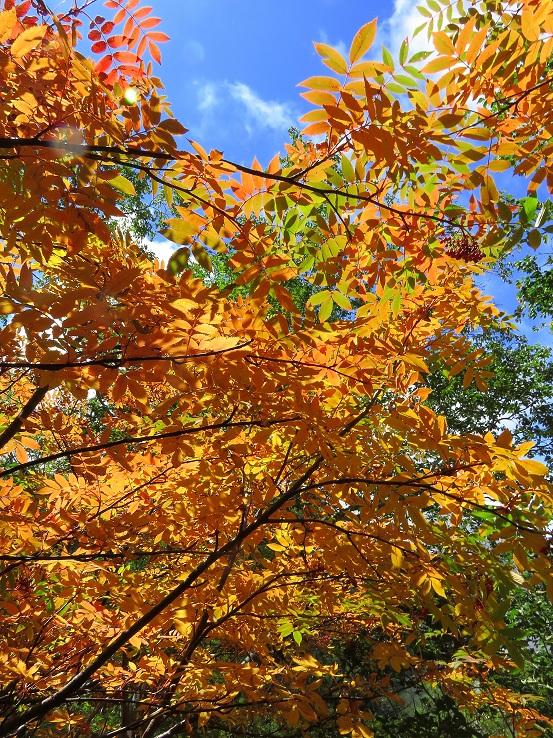 妙高山・火打山周辺の紅葉