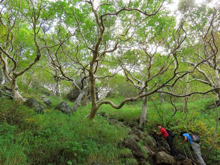 妙高山樹林帯