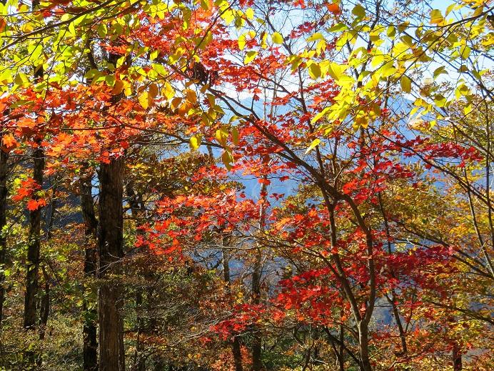前飛竜から熊倉山へのルート上の紅葉