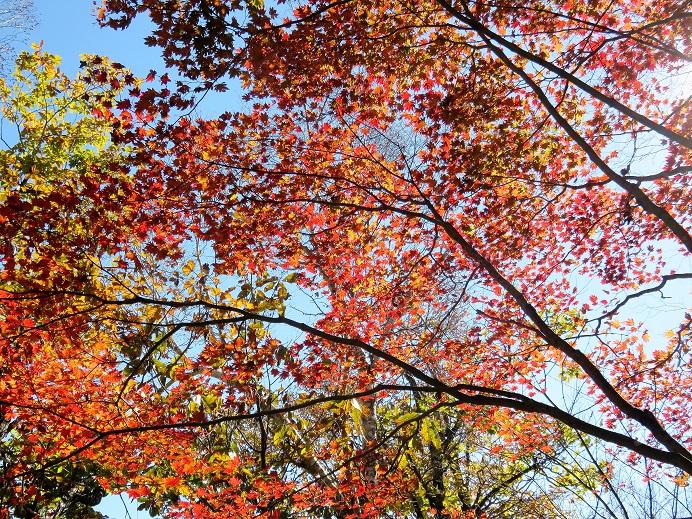 ミサカ尾根の紅葉