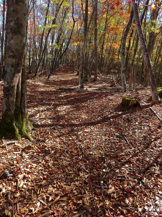 熊倉山からサオラ峠ルート