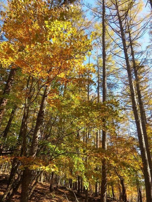 サオラ峠周辺紅葉の景色