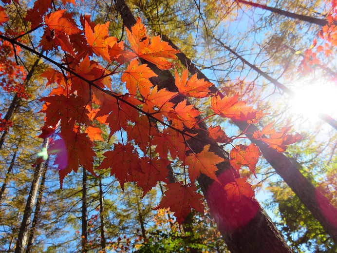 紅葉が最後の輝き
