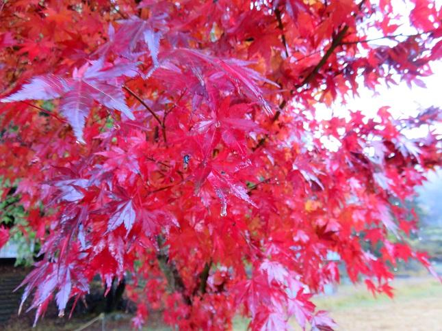 丹沢湖畔の紅葉