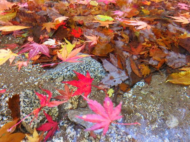 川の流れと紅葉
