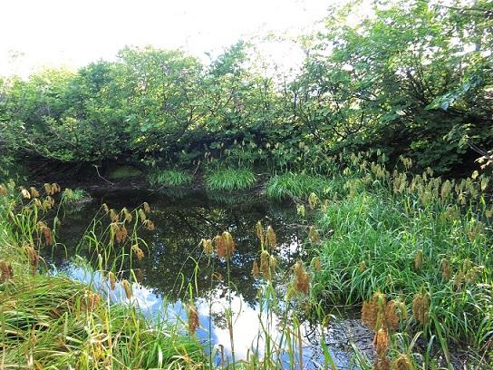 大嵓尾根池