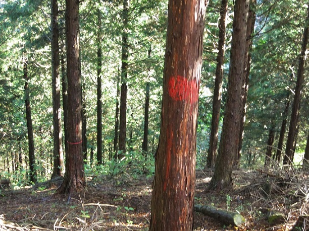 棒ノ木丸から造林小屋への降下点