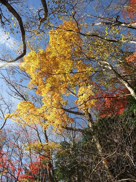棒ノ木丸山頂手前の紅葉