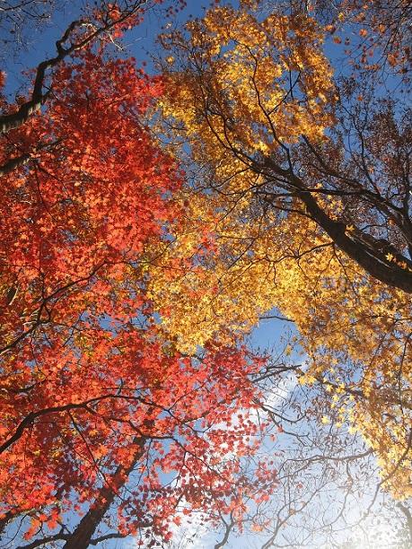 棒ノ木丸山頂の紅葉見事