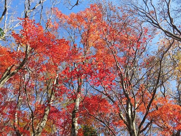 棒ノ木丸周辺の木々