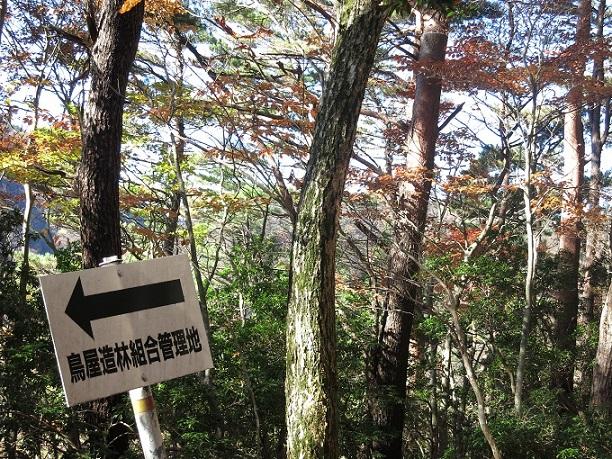 棒ノ木丸の登山道