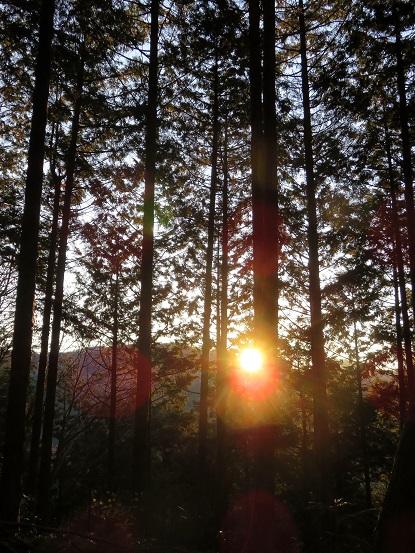 陣馬山登山道樹林帯でご来光