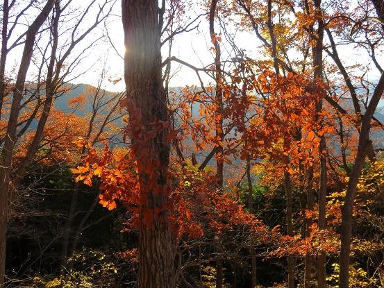 日帰りロング登山中の紅葉景色