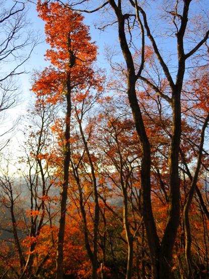 ロング登山中の紅葉景色