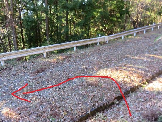 権現山登山道の林道