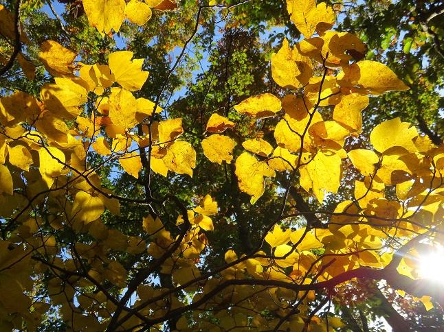 山梨県の紅葉