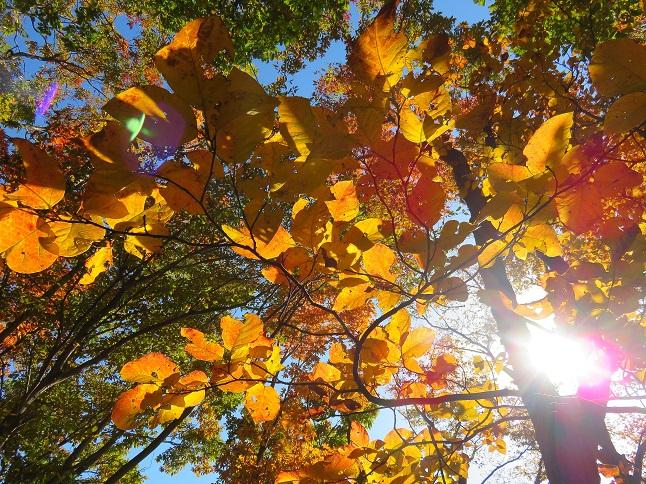 山梨県で撮った紅葉の写真
