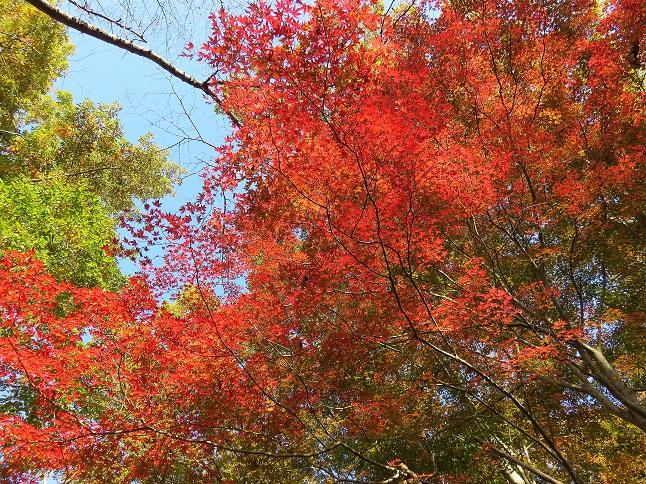国道20号線の沿線の低山で撮った紅葉写真