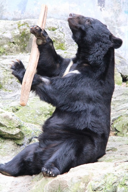 熊の大きさの写真