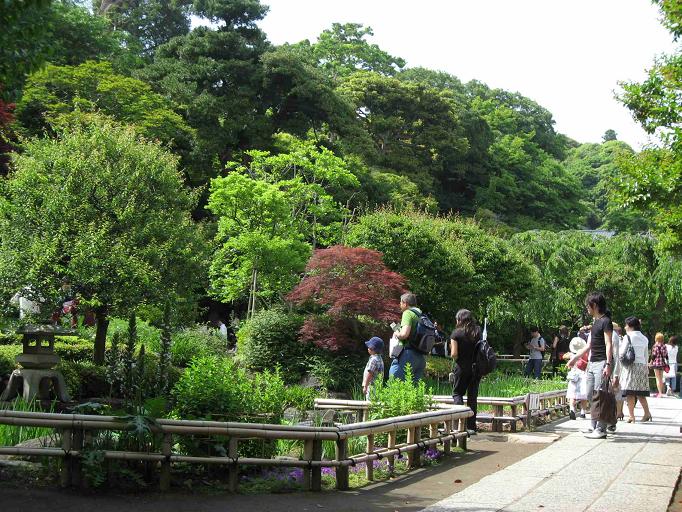 鎌倉長谷寺の境内