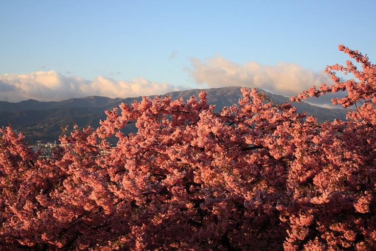 桜吹雪を散らしながら