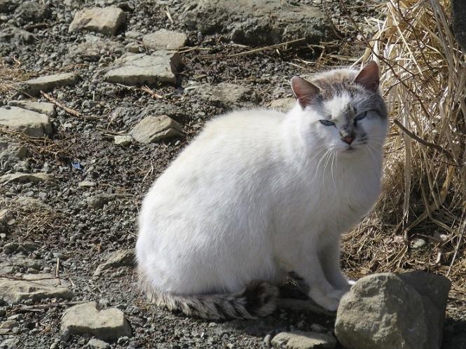 塔ノ岳の山頂に住み着くネコ