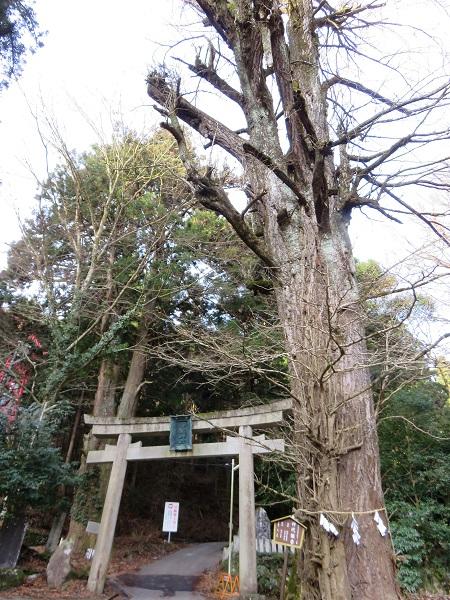 木の鳥居から御岳山・御嶽神社登山口
