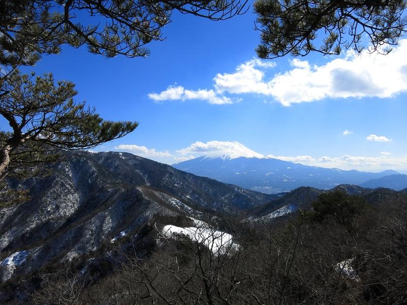 清八山の松と富士山遠望
