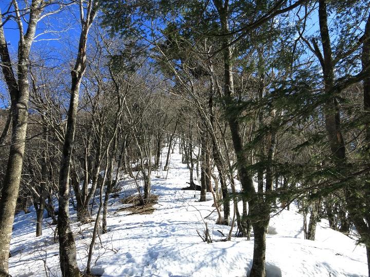 清八山から三ツ峠山残雪期登山ルートの様子