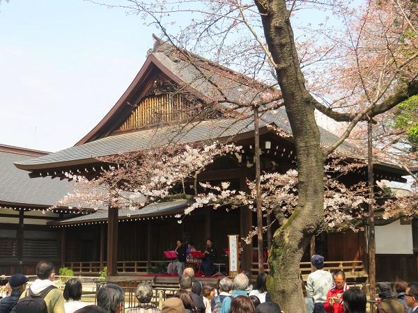 右手に見えているのが桜の木