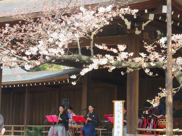 桜と演奏会