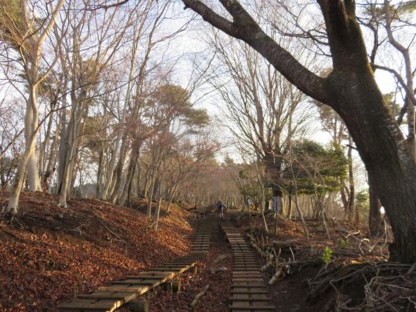 とても静かな大倉尾根・塔ノ岳へのルート