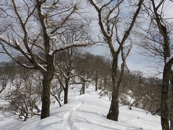 塔ノ岳から先雪が深く丹沢山までトレース