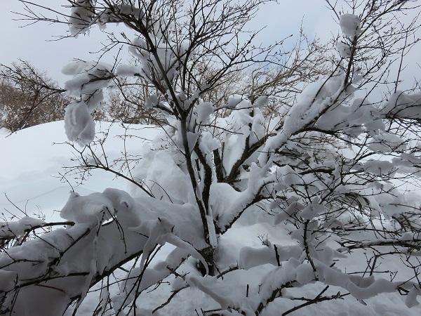 丹沢山・蛭ヶ岳周辺は積雪量が一気に増える