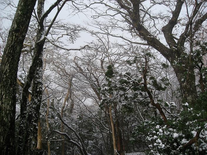 万三郎岳登山道ガスが広がる