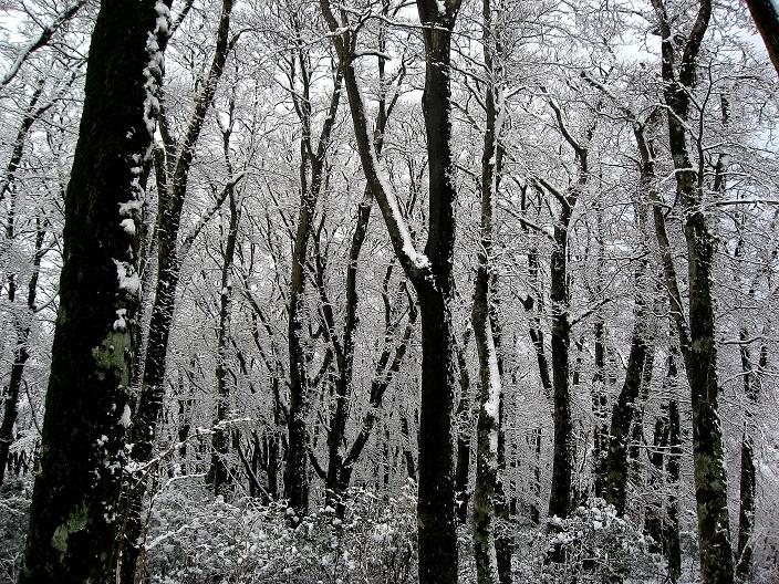 万三郎岳霧氷の森