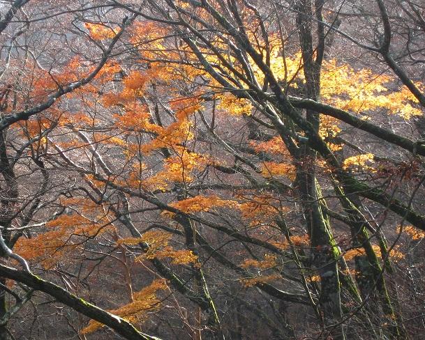 天城山万三郎岳周辺の紅葉