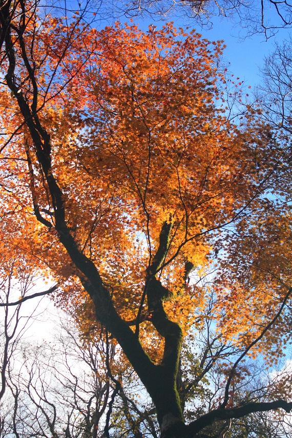 天城山の紅葉も素晴らしい